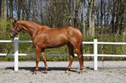 Horse for sale - Trendy Lady