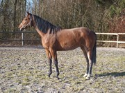 Hest til salg - RÅDBJERG'S PARI DARLING