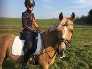 Horse for sale - AMIGO
