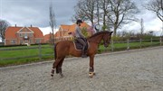 "Horse for sale - ""Hugo"""