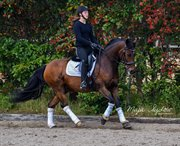Horse for sale - Action Junior