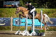 Horse for sale - STENSGAARDENS CHIKITA