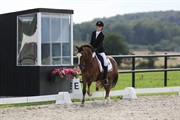 Horse for sale - FRONERTHIG VESUVIUS