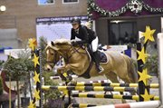 Horse for sale - CLEMENTS REINDEER