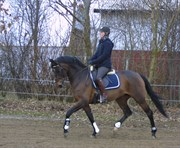 Horse for sale - ETNA