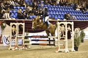 Horse for sale - BACARDI