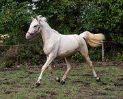 Horse for sale - XENNI FUGLEBJERG
