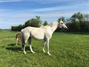 Horse for sale - UDINE