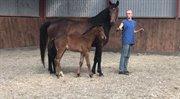 Horse for sale - GØR ET KUP!