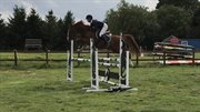 Horse for sale - DAHL'S KENZO