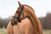 Hest til salg - GRENACHE