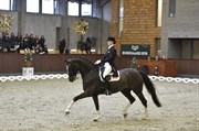Horse for sale - DONNA CHARIAN