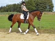 Horse for sale - BIRKHOLMS MONEY GIRL