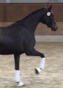Horse for sale - DACOYA S