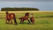 Horse for sale - ALIBI'S REMONDO