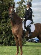 Horse for sale - LISSAU'S BELIZE
