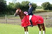 Hest til salg - THORSLUNDS DAY DREAM