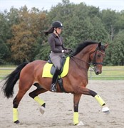 Horse for sale - OBERST