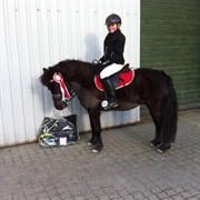 Hest til salg - FJORDENS FLEUR DELACOUR