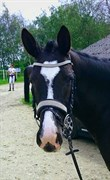 Horse for sale - MISS MINNIE