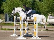 Horse for sale - ZIZI-FIDENCE BY WEST