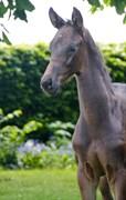 Hest til salg - Nem ID KK's