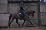 Hest til salg - KORSGÅRDS DIONA