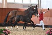 Horse for sale - HØJGAARDENS TOTO