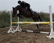 Horse for sale - ODBJERGS TZATZIKI