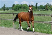 Horse for sale - LATCHMO HILLOCK