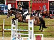 Horse for sale - QURAGE V