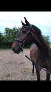 Horse for sale - FEJBORGS SILUET