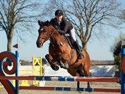 Horse for sale - CARNEVAL DE PA- RIS KORSVÆNGET