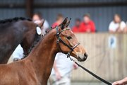 Horse for sale - MELLIE H