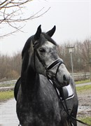 Horse for sale - SIRIKIT FUGLSANG