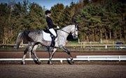 Horse for sale - SKIKKILD'S LEONESSE