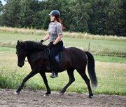 Horse for sale - GÁSKA KILDEGAARD