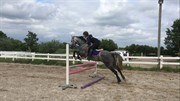 Horse for sale - E-PRIDE DYREBYGAARD