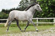 Horse for sale - Fabulosa VA