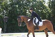 Horse for sale - BAUNEHØJENS FLORIDA