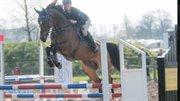 Horse for sale - Charmalin