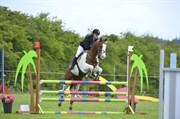 Hest til salg - Jay Jay sugerbars