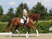 Horse for sale - Skikkilds Dolores