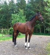 Horse for sale - Fürstin