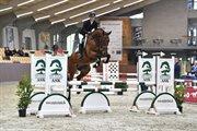 Horse for sale - LIBAKS CHICO