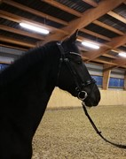 Horse for sale - FIONA