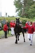 Horse for sale - SEVILLE NORD