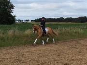 Horse for sale - RAWA'S CON-DIOS