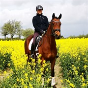 Horse for sale - FRENDERUPS ALONSO