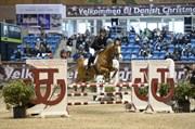 Hest til salg - TIK-A-LI OX